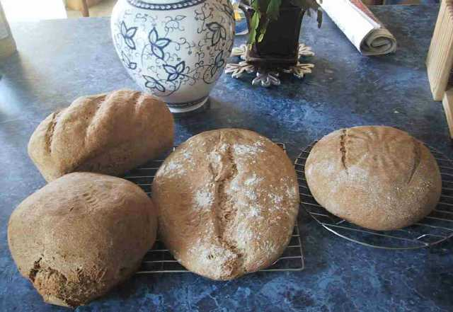 Hungarian Whole Wheat Family Portait