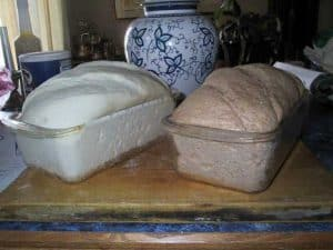 Comparing the rise of a whole wheat and white bread